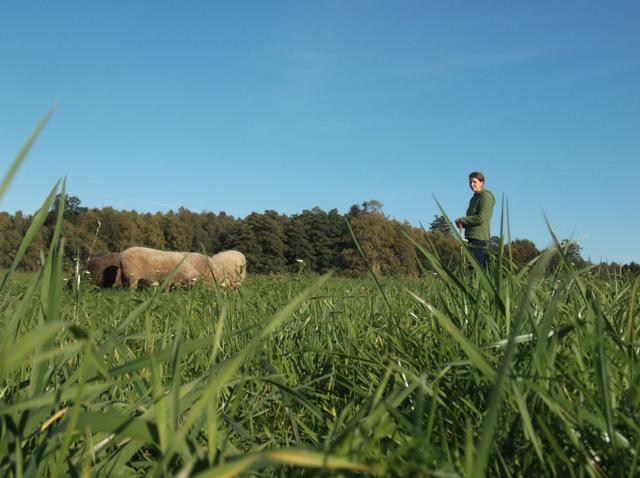 Unsere Schafe werden Teil von Raidho