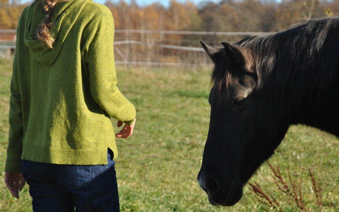 Das Pferd als weltbester Coach